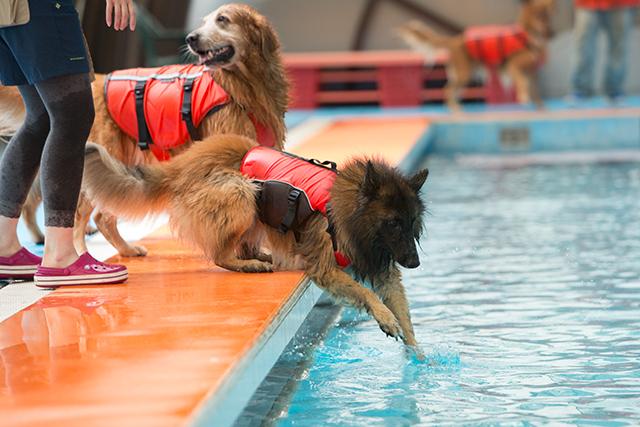 跳ぶ泳ぐ_e0192921_20415930.jpg
