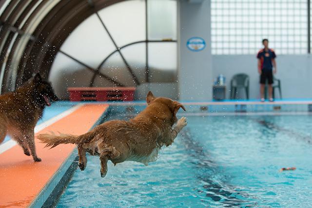 跳ぶ泳ぐ_e0192921_20421018.jpg