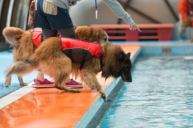 跳ぶ泳ぐ_e0192921_2042159.jpg