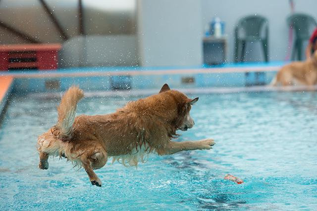 跳ぶ泳ぐ_e0192921_2042770.jpg
