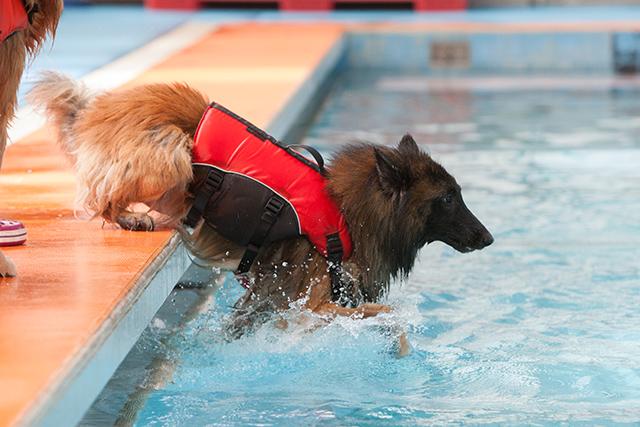 跳ぶ泳ぐ_e0192921_20495917.jpg
