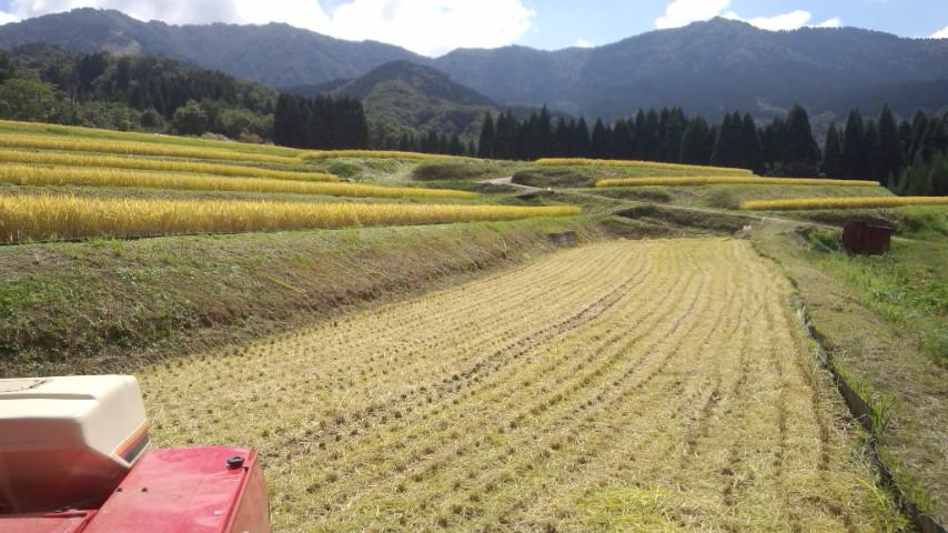 今年も我が家の稲刈り終わりましたー!!_f0101226_18134994.jpg