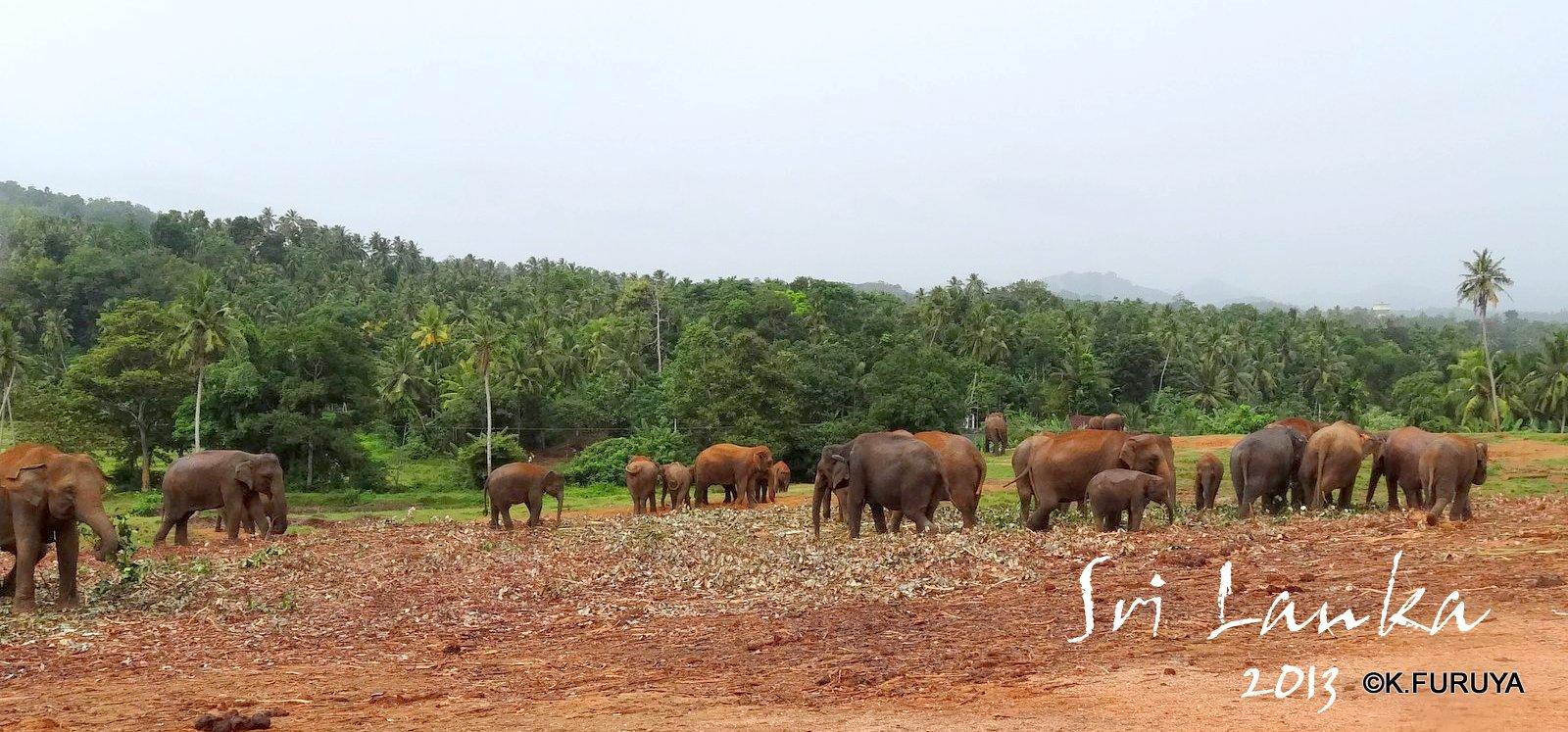 スリランカ旅行記 12 象の孤児院_a0092659_20521711.jpg