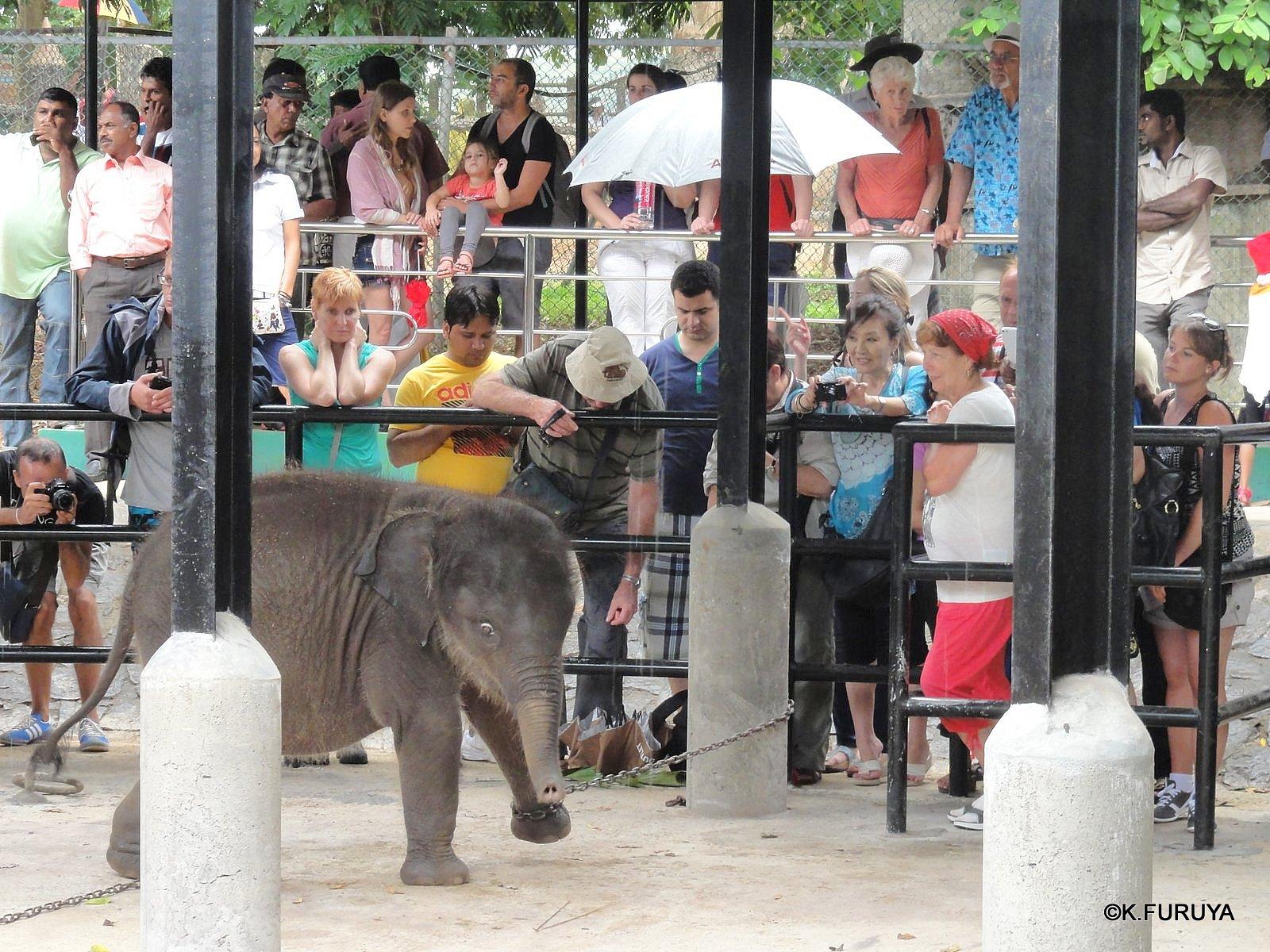 スリランカ旅行記 12 象の孤児院_a0092659_21115250.jpg
