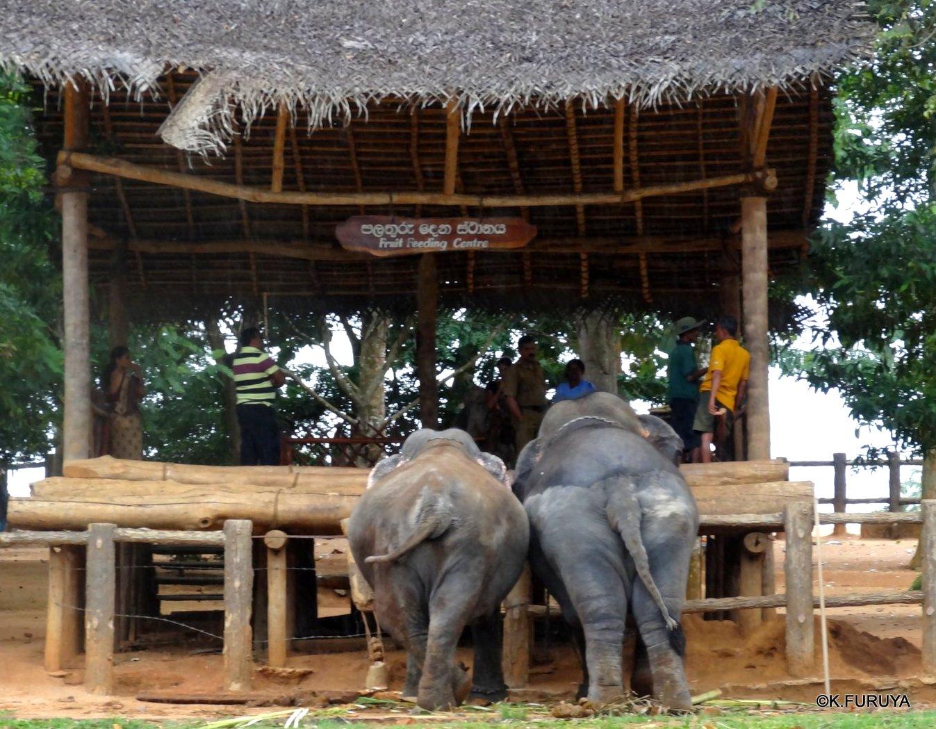 スリランカ旅行記 12 象の孤児院_a0092659_21184752.jpg