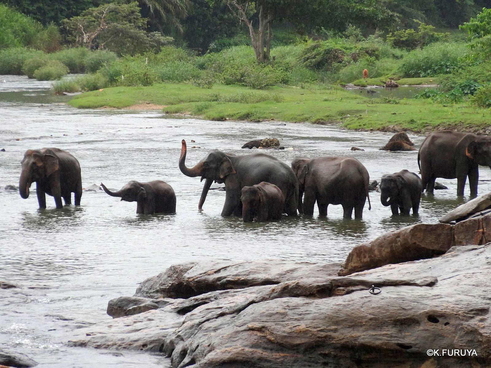 スリランカ旅行記 12 象の孤児院_a0092659_212857100.jpg