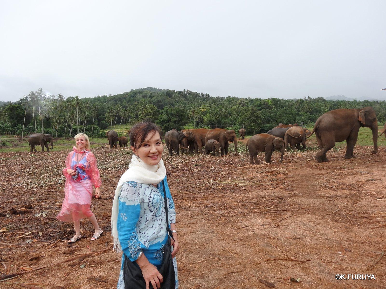 スリランカ旅行記 12 象の孤児院_a0092659_2183428.jpg