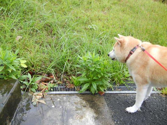 '13,9,25(水)秋雨って長いのよね~!_f0060461_10394073.jpg