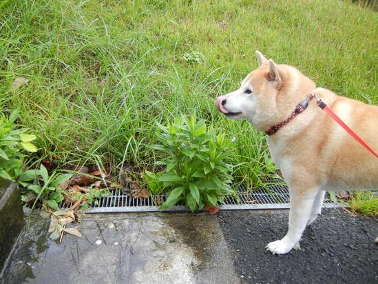 '13,9,25(水)秋雨って長いのよね~!_f0060461_10415457.jpg