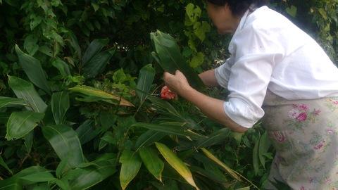 米山ガーデン料理教室「笹の押し寿司」。_d0182179_1391388.jpg