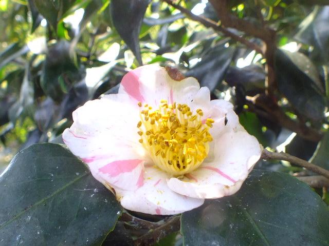 9月22日 くりはま花の国 その2_e0145782_18542263.jpg