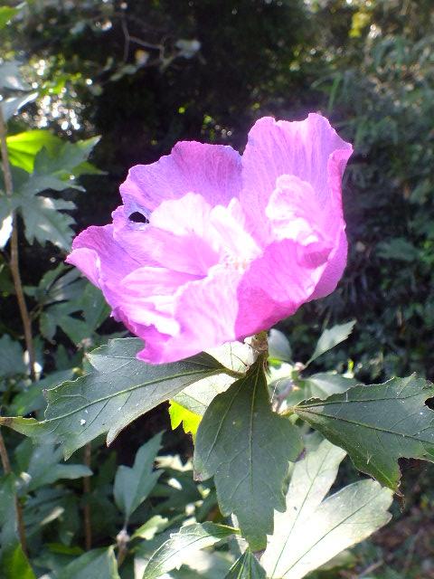 9月22日 くりはま花の国 その2_e0145782_18554766.jpg