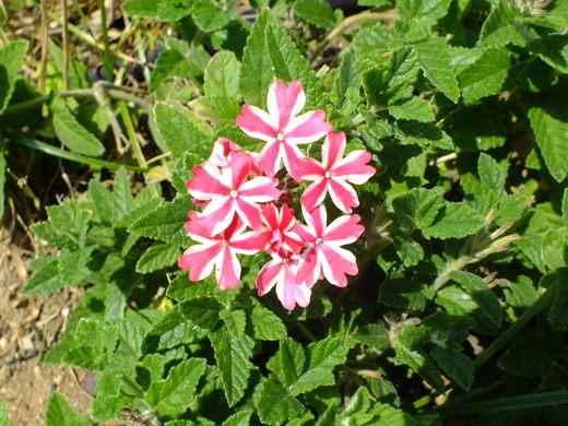 9月22日 くりはま花の国 その2_e0145782_1911092.jpg
