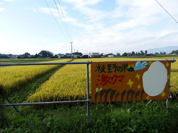 9月25日の田んぼ(上目黒小・枝野小)_d0247484_1048051.jpg