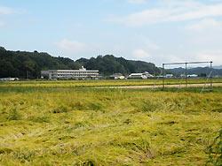 9月25日の田んぼ(緑ヶ丘小・北郷小)_d0247484_1247523.jpg