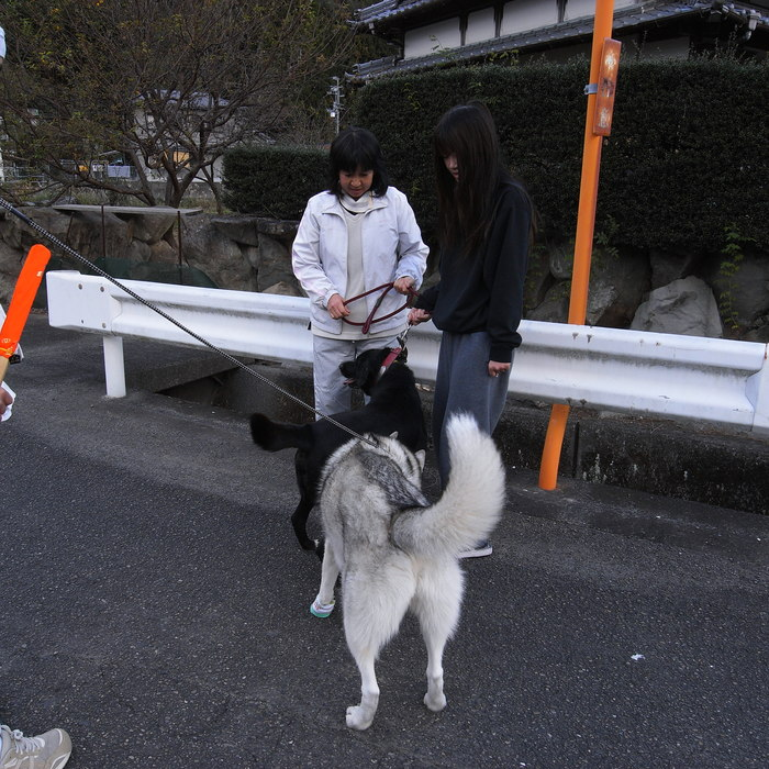 Memory of the second pilgrimage with husky HANA_c0049299_20181364.jpg