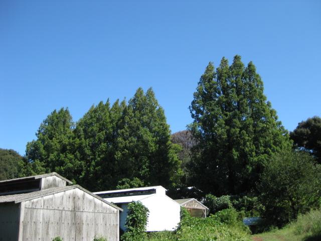 今日の農場_d0139806_2236352.jpg
