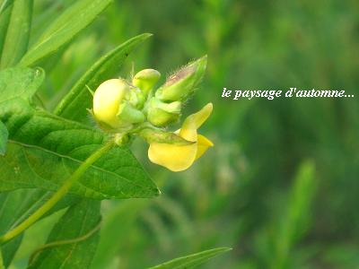 小さな、命の輝き・・・♪_c0098807_20512574.jpg