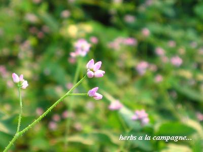 小さな、命の輝き・・・♪_c0098807_21301613.jpg