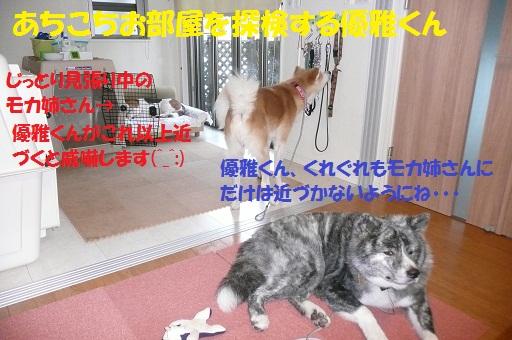 f0121712_10511699.jpg