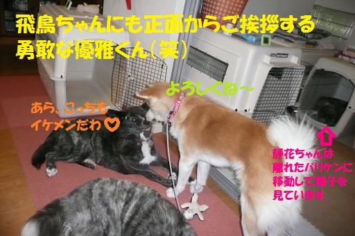 f0121712_1051281.jpg
