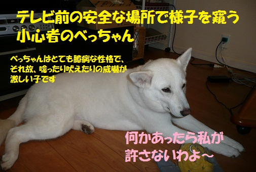f0121712_1143287.jpg