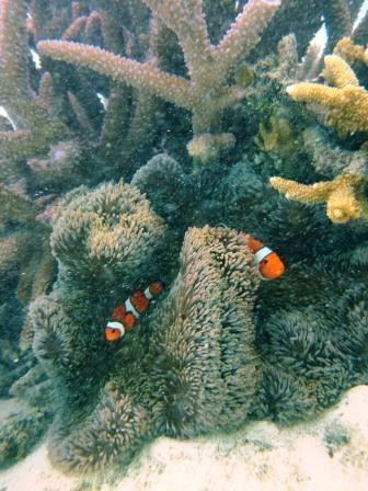一面のサンゴ礁~♪_a0189838_16165198.jpg