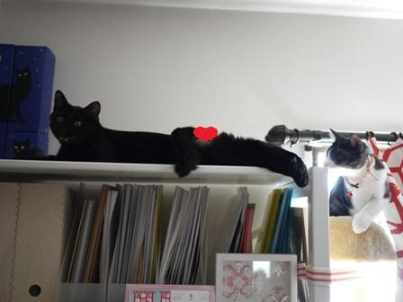 おさるのかごや猫 ぎゃぉすみるきぃ編。_a0143140_1739010.jpg