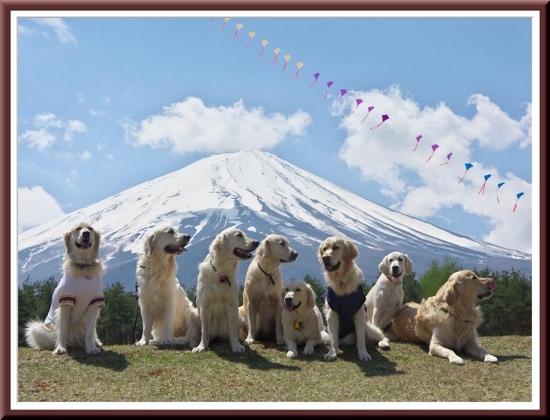 愛犬との富士山写真展_f0018464_19154072.jpg