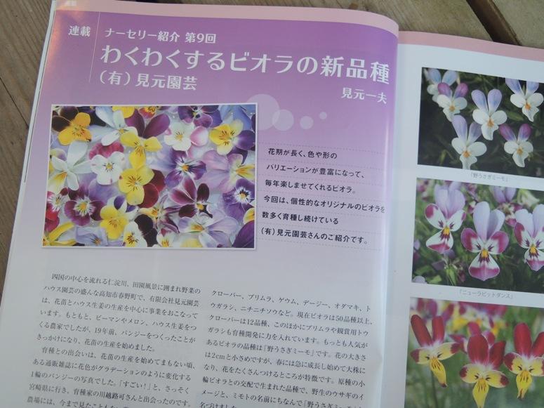 見元さんのビオラ花物語は、1枚の写真から・・・・・_b0137969_18313937.jpg