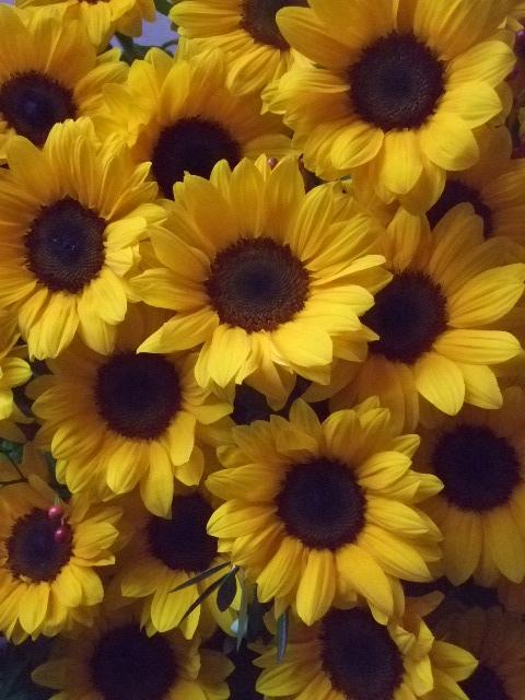 オークリーフ(インパクトのある花)_f0049672_14553280.jpg