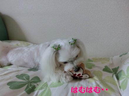 b0193480_14514852.jpg