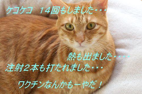 f0197682_21241527.jpg