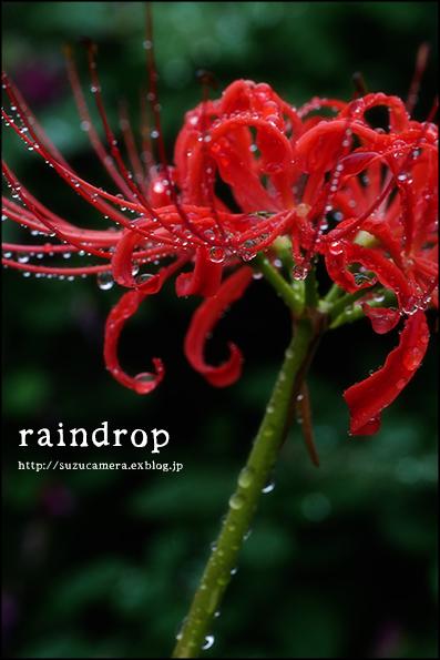 雨の日の愉しみ_f0100215_23501519.jpg