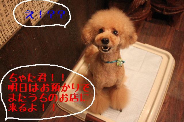 おはよぉ~ございます!!_b0130018_1024126.jpg