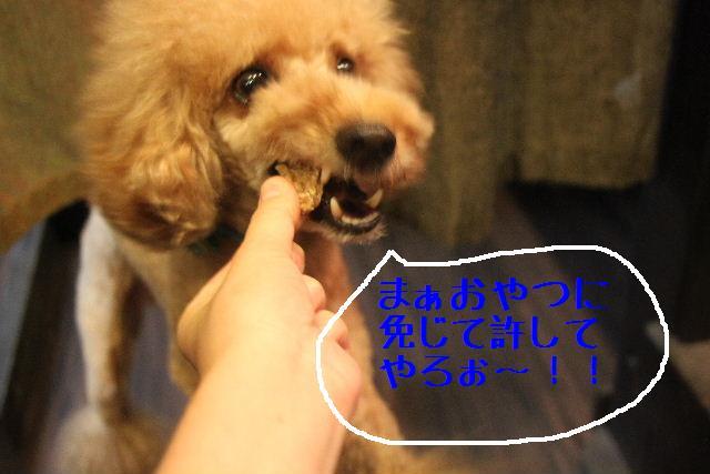 おはよぉ~ございます!!_b0130018_10243792.jpg