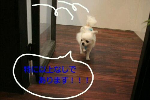 幸せだなぁ~_b0130018_23205251.jpg