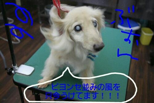 幸せだなぁ~_b0130018_238019.jpg