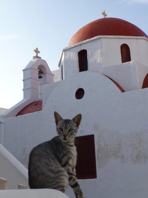 世界の猫 写真館 ギリシャ ミコノス・タウン編_e0237625_22252971.jpg