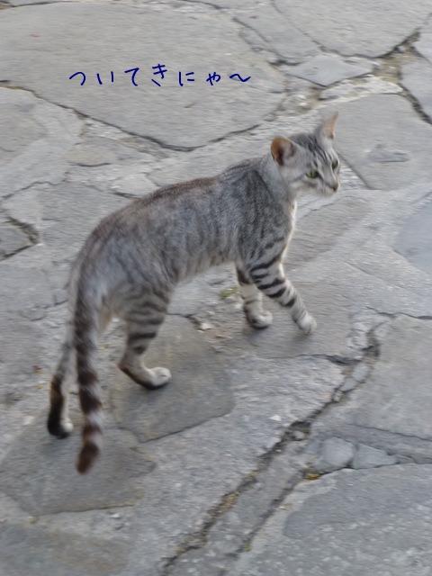 世界の猫 写真館 ギリシャ ミコノス・タウン編_e0237625_2227754.jpg