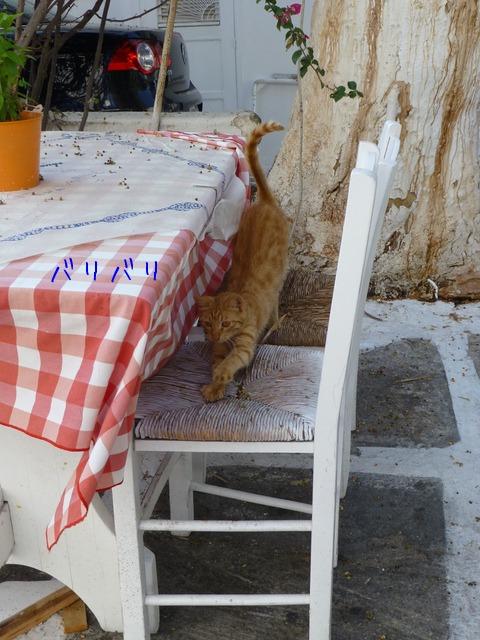 世界の猫 写真館 ギリシャ ミコノス・タウン編_e0237625_2230239.jpg