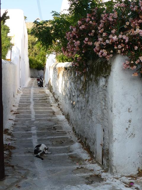 世界の猫 写真館 ギリシャ ミコノス・タウン編_e0237625_2232643.jpg