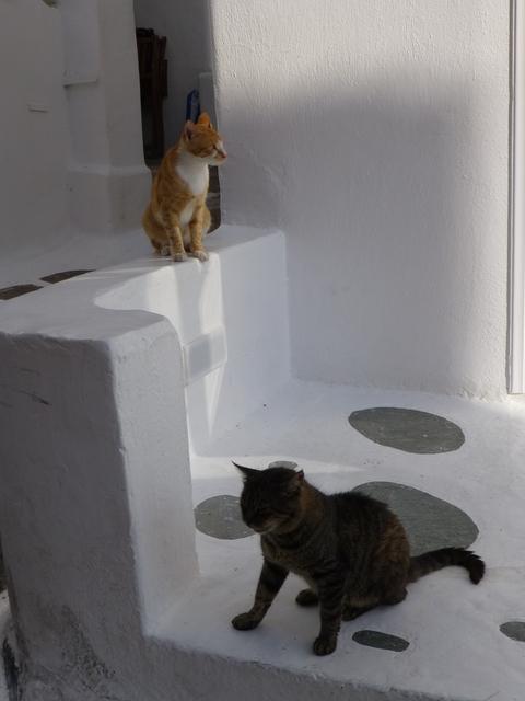 世界の猫 写真館 ギリシャ ミコノス・タウン編_e0237625_22333632.jpg