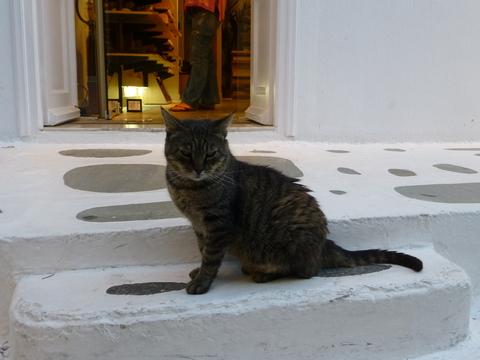 世界の猫 写真館 ギリシャ ミコノス・タウン編_e0237625_22345616.jpg