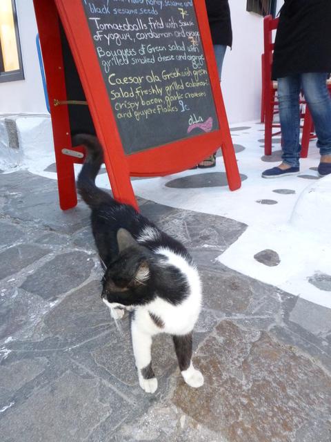 世界の猫 写真館 ギリシャ ミコノス・タウン編_e0237625_22355593.jpg