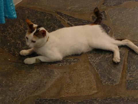 世界の猫 写真館 ギリシャ ミコノス・タウン編_e0237625_22385097.jpg
