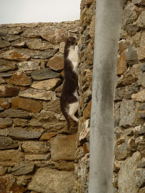 世界の猫 写真館 ギリシャ ミコノス・タウン編_e0237625_22472016.jpg