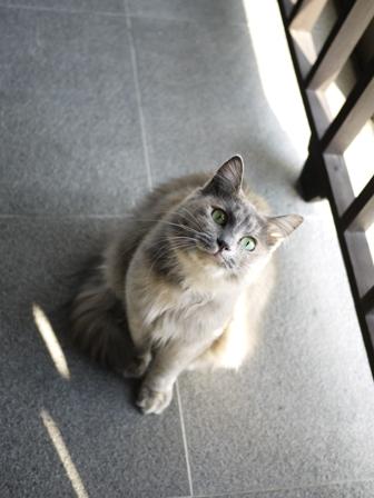 猫のお友だち たびおくんシソちゃん編。_a0143140_2141655.jpg
