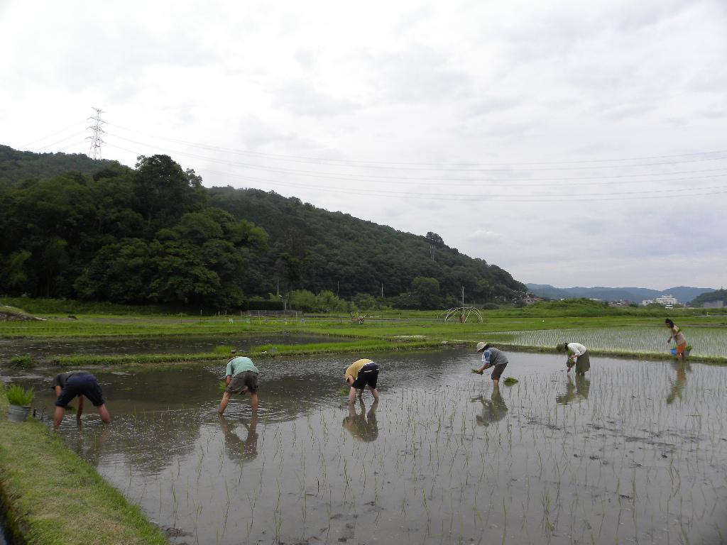 岡山稲刈りツアー_c0226146_16352861.jpg