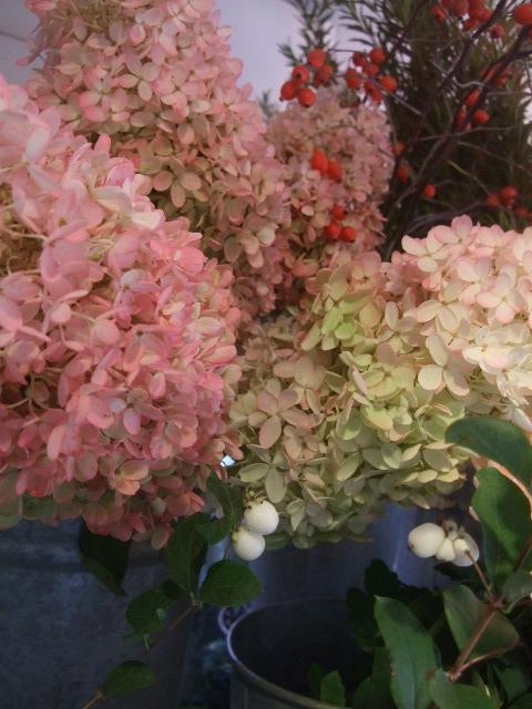 オークリーフ(秋の花)_f0049672_16453265.jpg